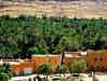 an-oasis-errachidia-morocco