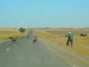 morocco-goat-farmer